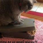 tn_коты