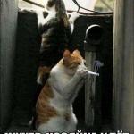 tn_котяры на шухере