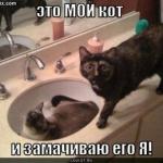 tn_котёнок в блюдце