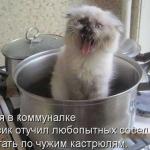 tn_котёнок в ведре