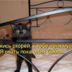 tn_котёнок испуганный