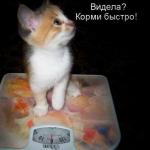 tn_котёнок на весах