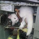 tn_кот вирус