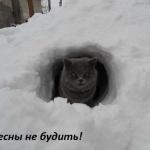 tn_кот в сугробе