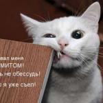 tn_кот грызёт