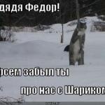 tn_кот ждёт