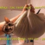 tn_кот завёрнутый