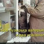 tn_кот за валерьянкой