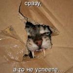 tn_кот и коробка 1