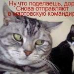 tn_кот и кошка