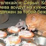 tn_кот и крыса