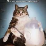 tn_кот и молоко