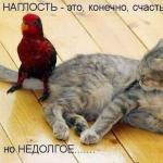 tn_кот и попугай