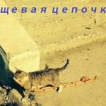 tn_кот и сосиски