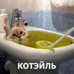 tn_кот коктель