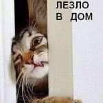tn_кот лезет в дом