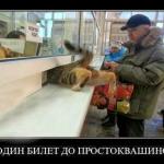 tn_кот лезет в кассу