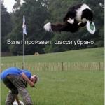 tn_кот летит