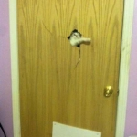 tn_кот ломает дверь