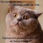 tn_кот мечтает