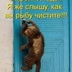 tn_кот на двери