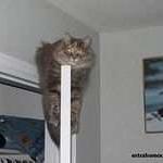 tn_кот на дверях