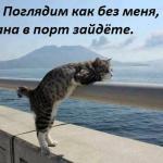 tn_кот на пирсе