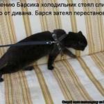 tn_кот на поводке