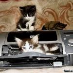 tn_кот на принтере