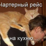 tn_кот на шее