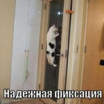 tn_кот на шкафу