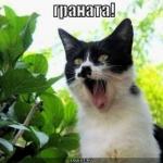 tn_кот орёт