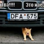 tn_кот под авто