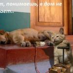 tn_кот, пёс и динамит