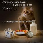 tn_кот с едой