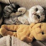 tn_кот с медвежонком