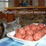 tn_кот с мясом