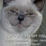 tn_кот улыбается