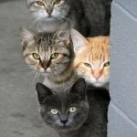 tn_кошачьи морды за углом