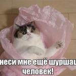 tn_кошка в пакете