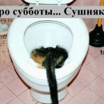 tn_кошка или кот в унитазе