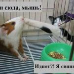tn_кошка и свинка морская
