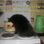 tn_кошка мордой в кастрюле