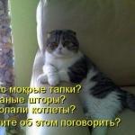 tn_кошка психолог