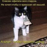 tn_кошка с деньгами