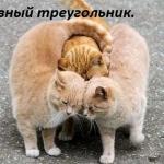 tn_любовный треугольник