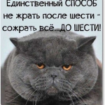 tn_толстая кошачья морда