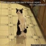 tn_удивлённый котяра