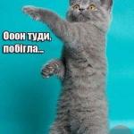 tn_хохляцкий кот