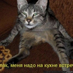 tn_256975004